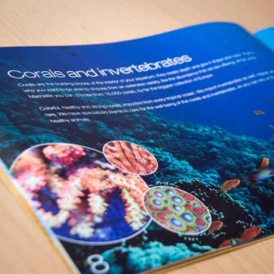 De Jong Marinelife brochure